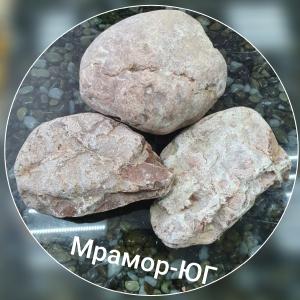 Пион розовый фракция 100-170 мм